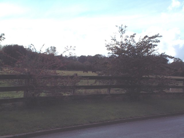 Horse paddocks and farmland viewed from Manor Road