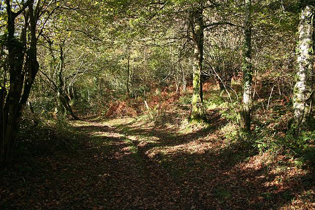 Loxhore: Smythapark Wood