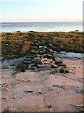 TA3117 : Sunk Island Sands - south of Newlands by Paul Glazzard