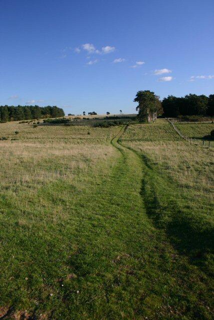 Open Access Land near Icklingham