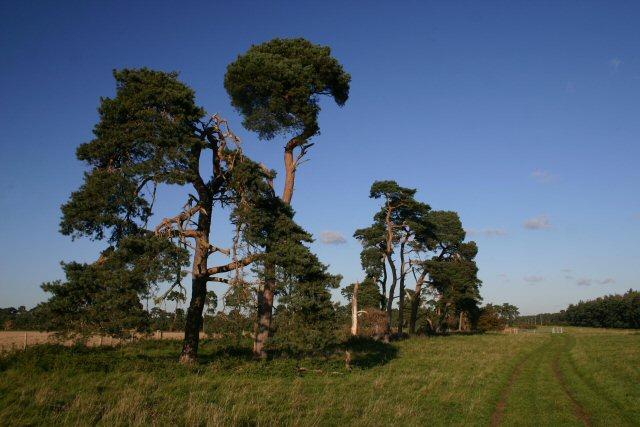 Seven Tree Road
