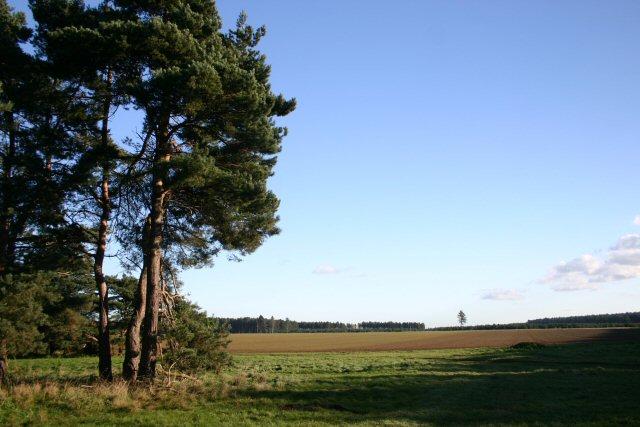 Fields near Bernersfield Farm