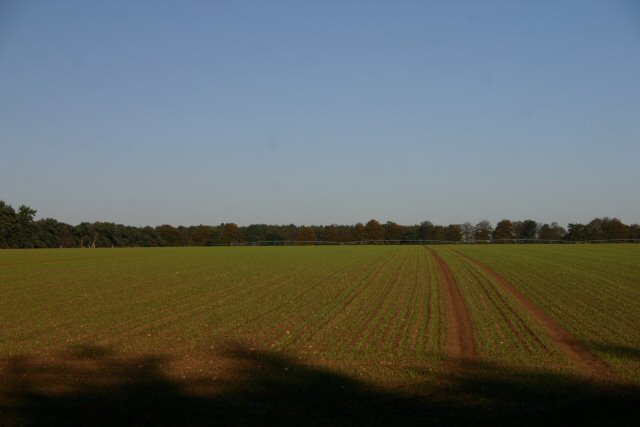 Berner's Heath