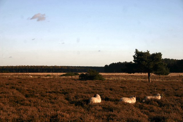 Berner's Heath