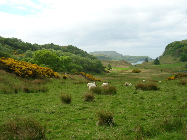 Grazing and Gorse NW of Minard Point
