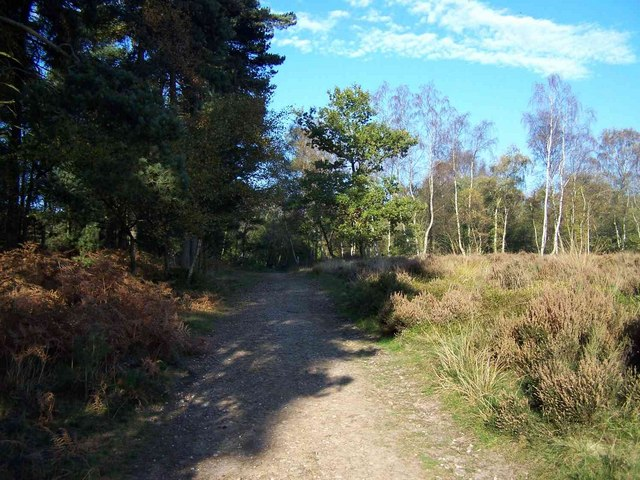 Brindley Heath, Cannock Chase