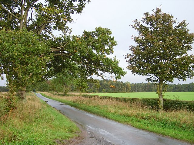 Tree lined road