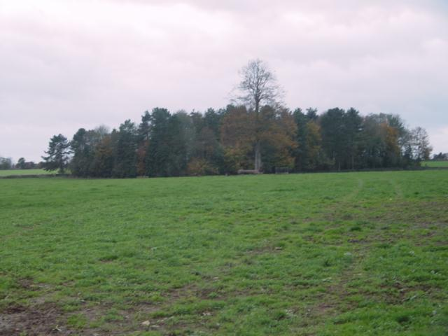 Woodland near Culkerton