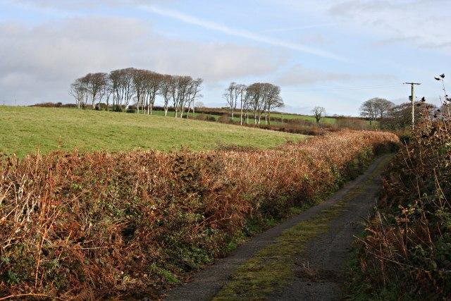 Country Lane through Pasture Land