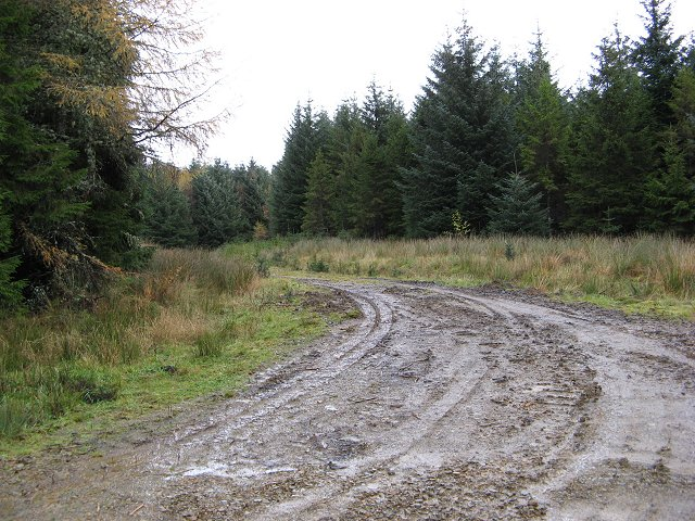 Newish forest road.