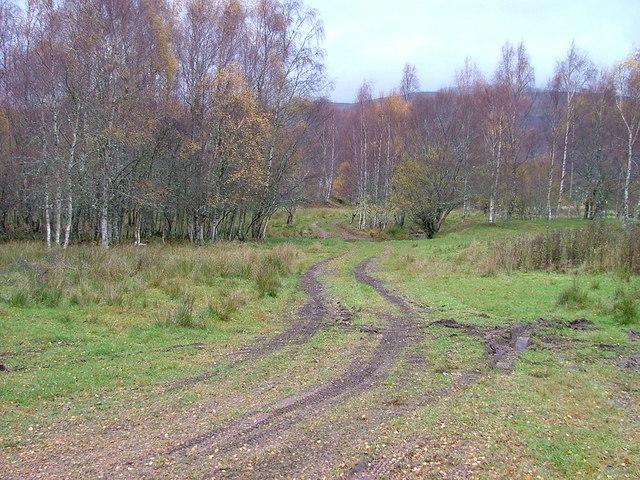Birch Woods in Glen Moriston