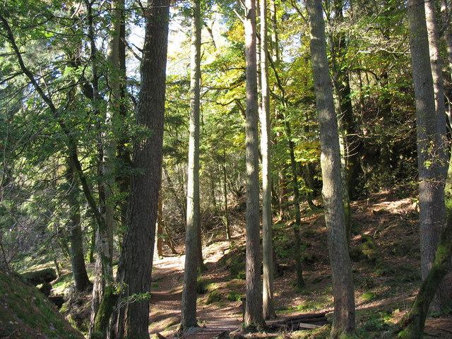 Craflwyn Woods