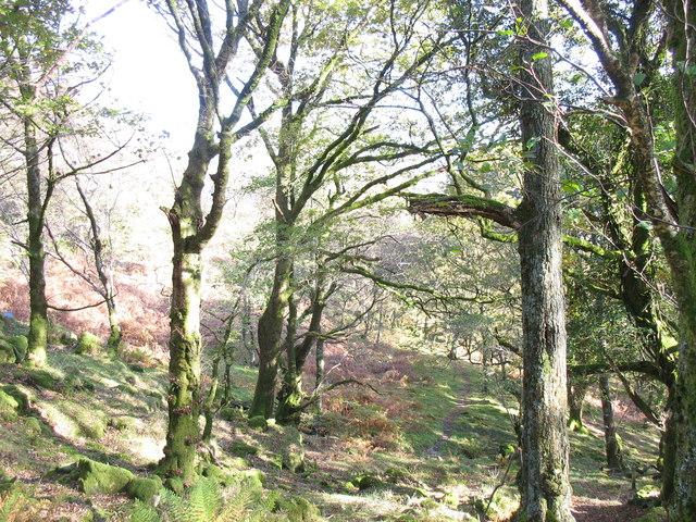 Woodland path, Coed Craflwyn
