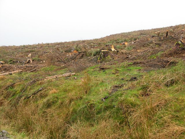 Felled area, The Shank
