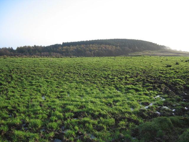 Knockenae Plantation