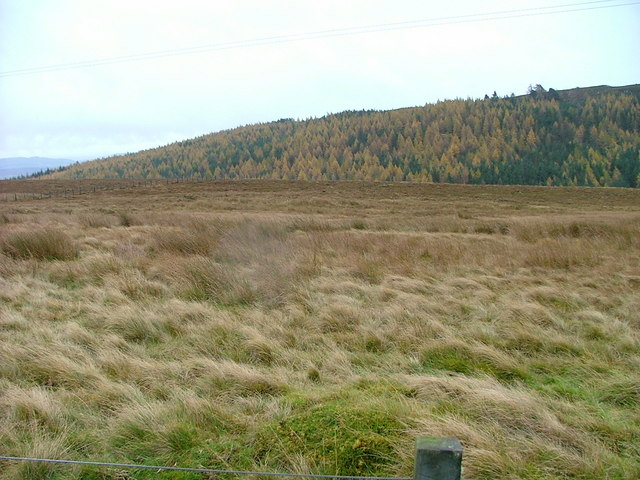 Moorland and Forest at Blackfold