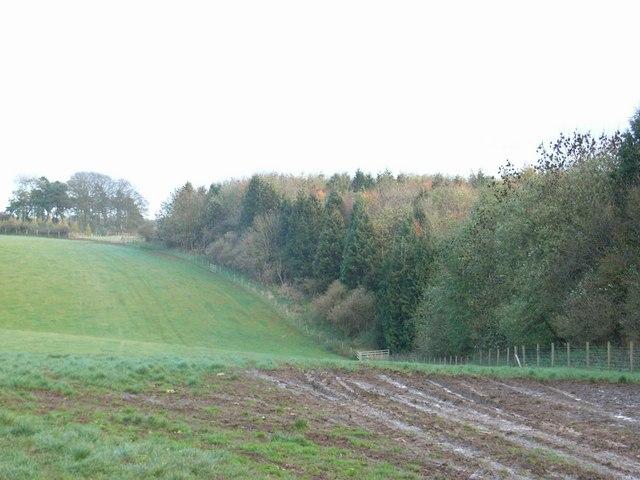 Keeper's Hill Wood
