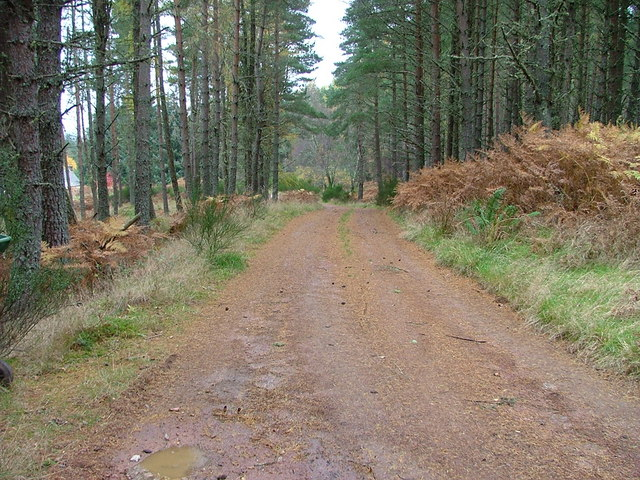 Forest Track at Balliemore