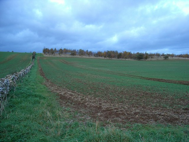 Field with young woodland