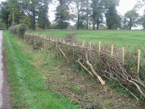 Traditional hedging