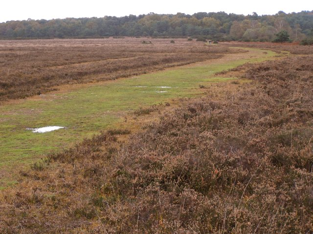 Track on Hale Purlieu, New Forest