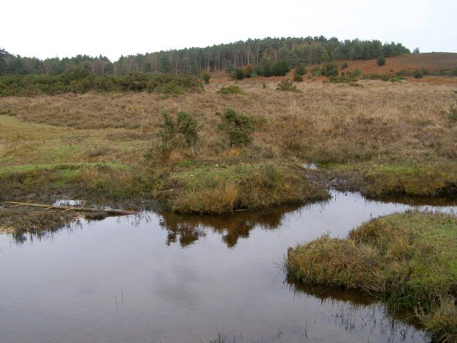 Millers Ford, towards Millersford Copse, New Forest