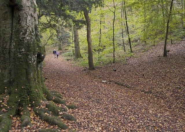 Cleeve Wood