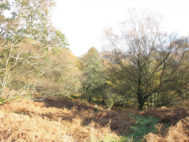 Native trees in the upper reache of the woodland
