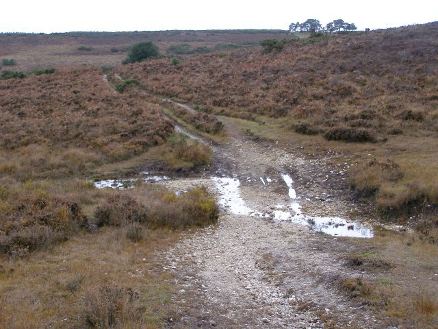 Wet path north of Leaden hall, New Forest