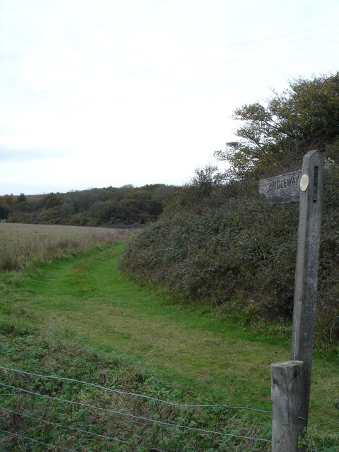 Bridleway on edge of Martin Down, towards Vernditch Chase