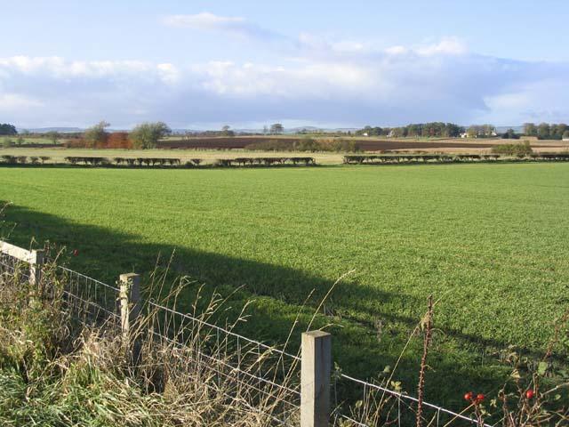 Merse farmland