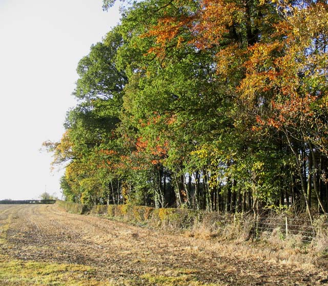 Field boundary near Nabdean