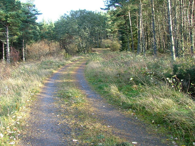 Track Through Kinlea Wood