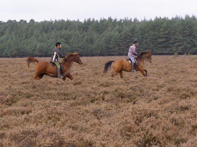 Riders on Ober Heath, New Forest