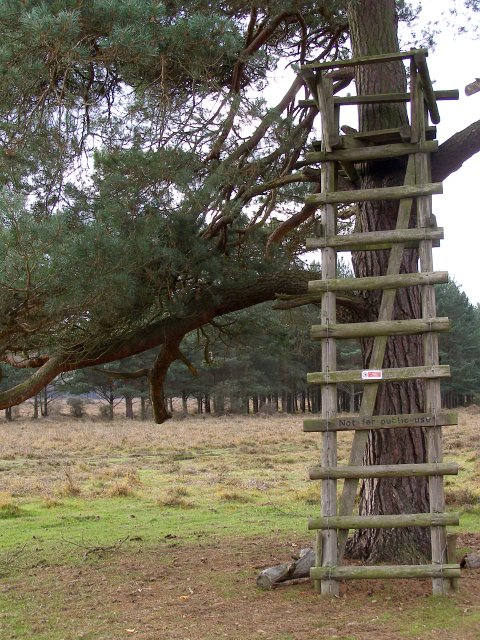 Deer seat on the edge of Ober Heath, New Forest