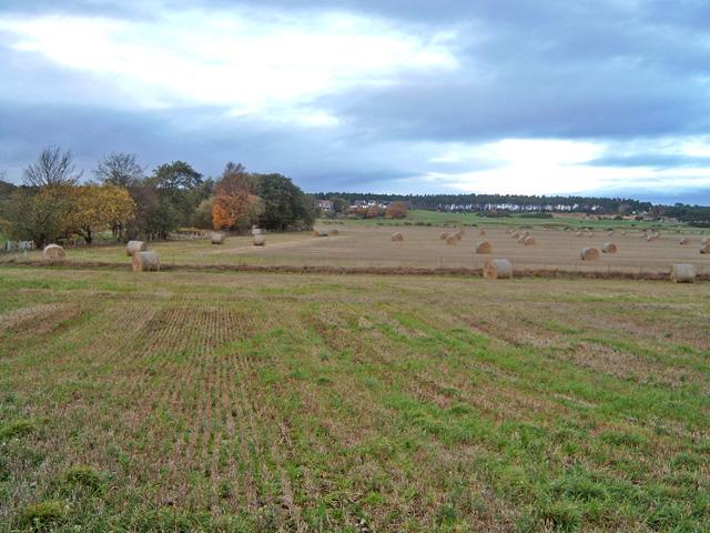 Moss-side from near Balnaspirach
