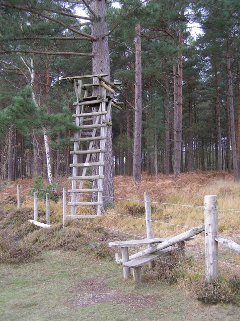 Deer stalking seat on the edge of Poundhill Inclosure, New Forest