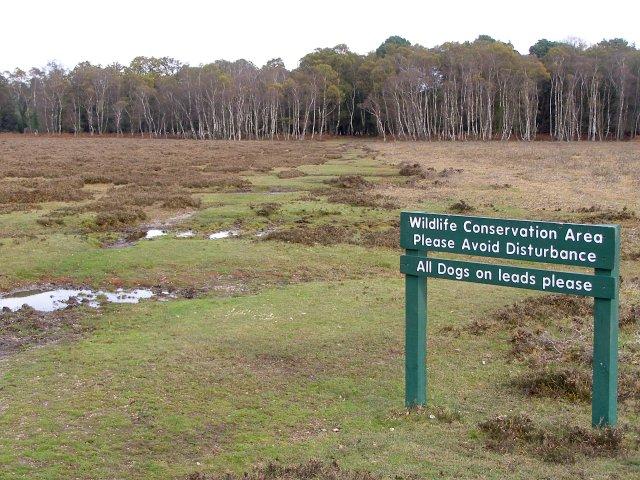 Poundhill Heath, New Forest