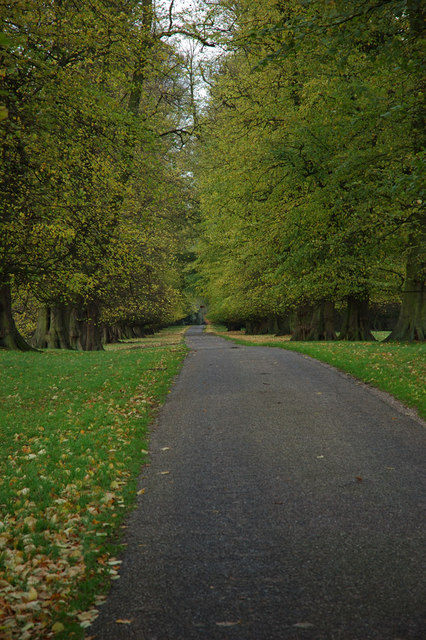 Lime Avenue, Calke Park