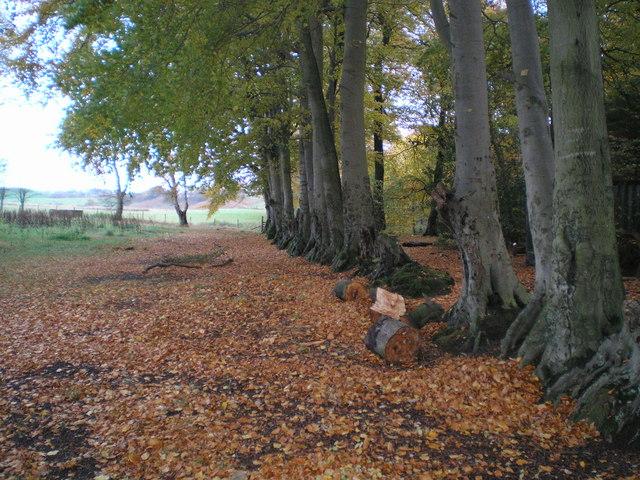 Late Autumn at Talkin Tarn
