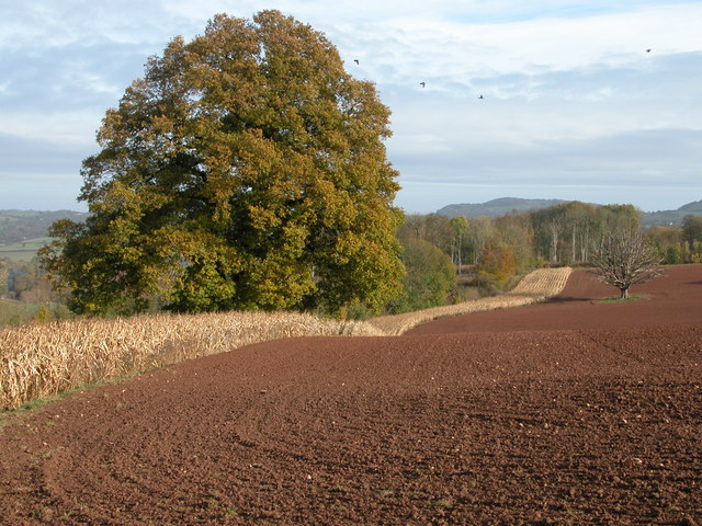 Arable land above Beehive Coppice