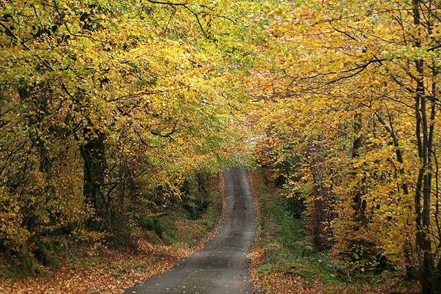 Buckland St Mary: near Beeches Farm