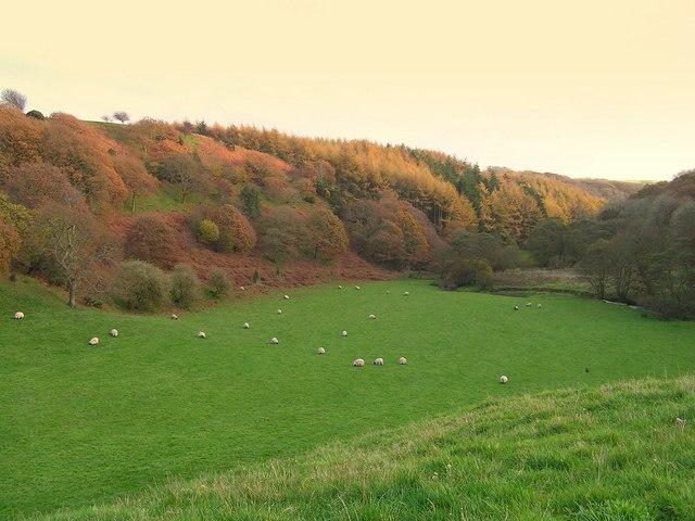 Stockbridge pasture