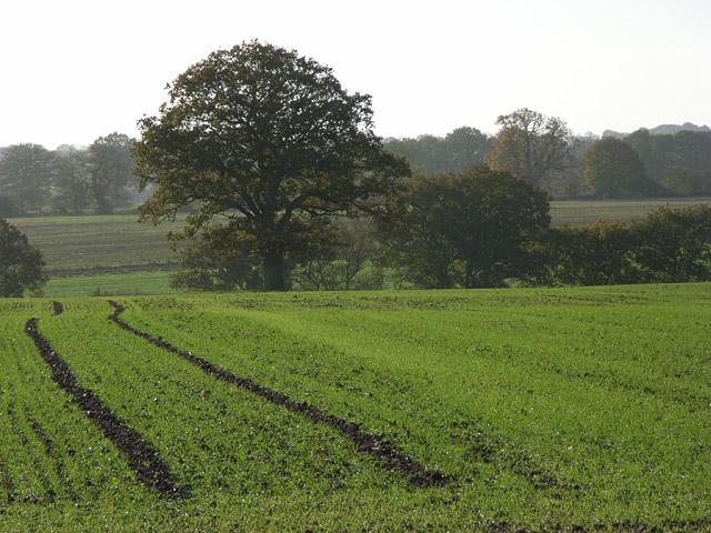 Farmland above Marlborough