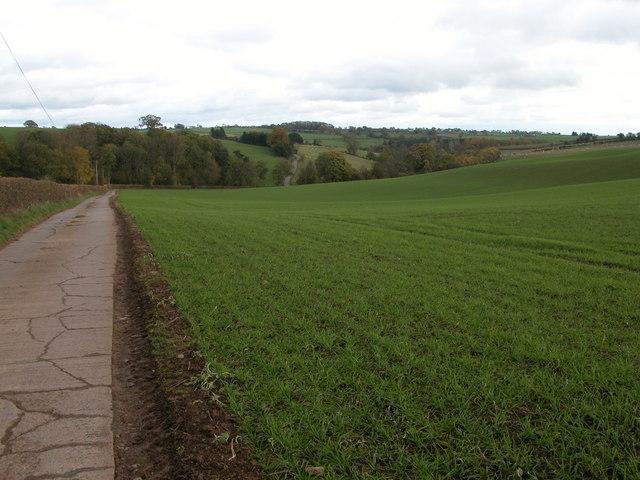 Driveway to Burton Court, Upper Sapey