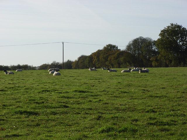 Farmland, Manton