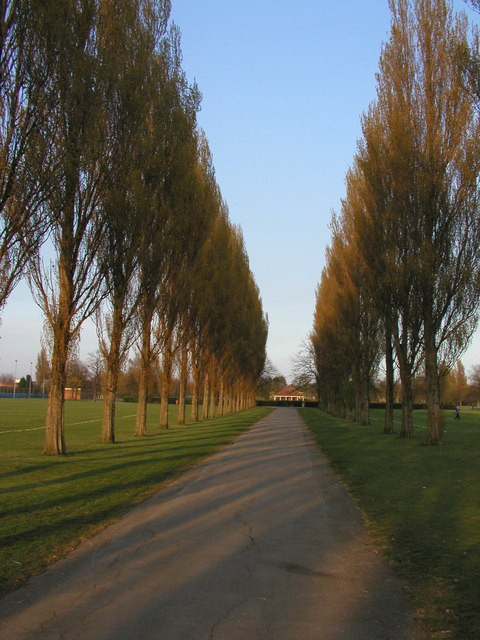 Poplars at Costello