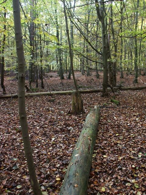 Deciduous woodland, Two Mile Bottom