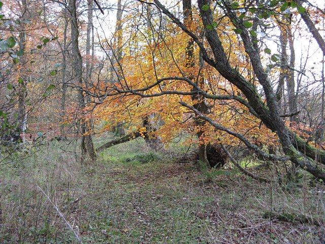 Woodland by Mill Dam