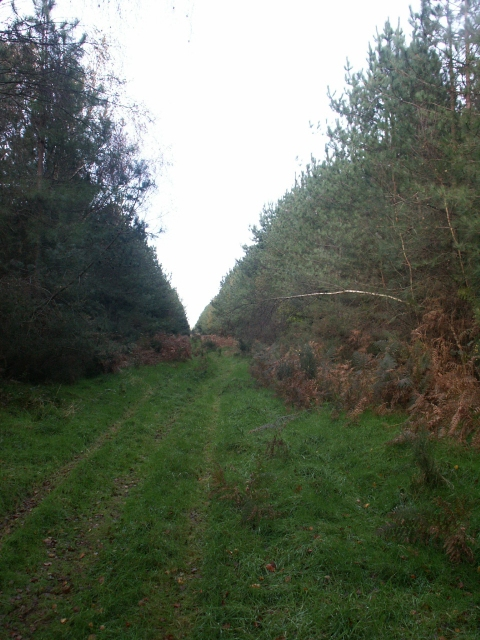 Forest track, near Two Mile Bottom